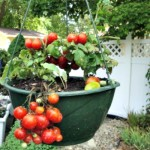 6 Tips for New Vegetable Gardeners