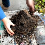 How to Start Planting, Sow Seeds and Maximize Garden Space