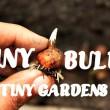 small garden ideas, miniature garden bulbs