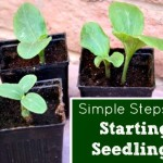 How to Start Seedlings the Natural Way