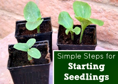 natural seed starting, how to start seeds