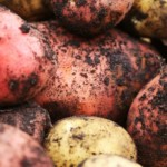 Growing Potatoes in Containers [video]