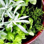 How to Make a One-Pot Indoor Herb Garden