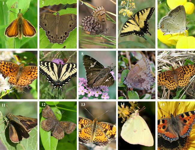 Butterfly Garden Flowers & Plants by Region