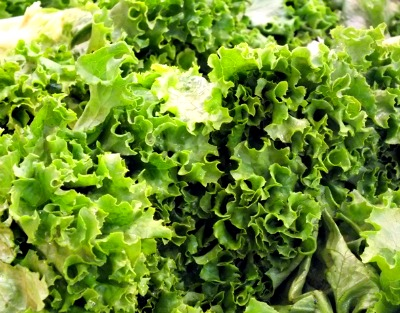 How to Harvest Lettuce in a Container Garden