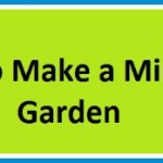 How to Make a Mini Garden