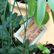 13 Tips for Planting an Herb Garden