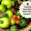 5 Ways to Save Even More Money Gardening