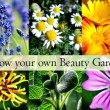 Growing a Beauty Products Garden – 28 Plants, Flowers & Herbs