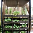 5 Easy Small Vegetable Garden Ideas to Try