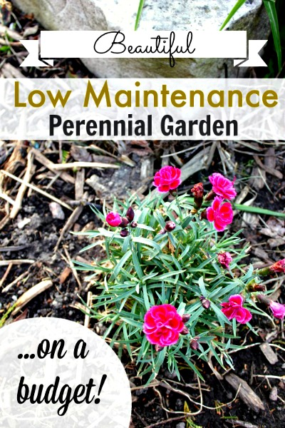 How to Grow a Low-Maintenance Perennial Garden on a Budget!