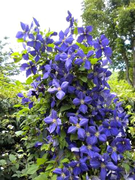 Magnificent Summer Flowers to Grow