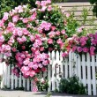 The 10 Biggest Mistakes People Make When Pruning Roses