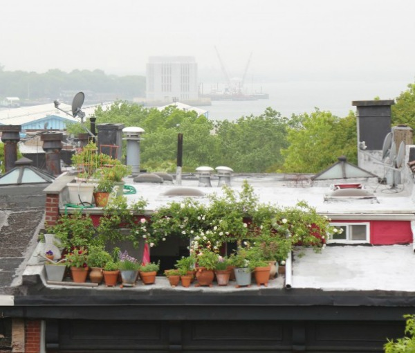 Top 10 Secrets for Growing an Urban Balcony Garden