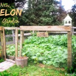 Our New Melon Garden – Stage One: Tilling and Planting