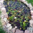 6 Amazing Garden Ponds
