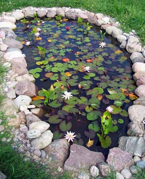 6 amazing garden ponds small garden ideas for Amazing small gardens