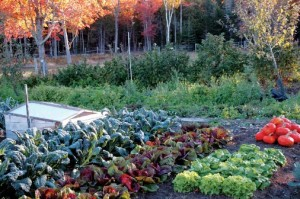 Top Tips for Great Fall Gardens