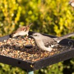 Problems with Bird Seed in the Garden