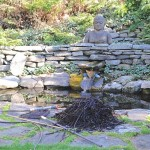 14 Springtime Water-Garden Care Tips
