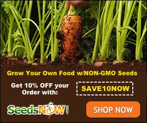 Seeds Nows Discount