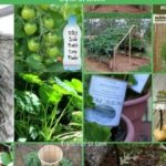 100 Expert Gardening Tips, Ideas and Projects that Every Gardener Needs to Know
