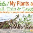 Help Leggy Plants