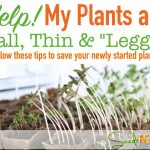 How to Help Tall, Thin, Leggy Plants