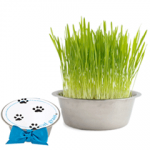 Growing Pet Bowl – Cat Grass