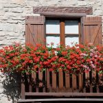 10 Tips to Start a Balcony Flower Garden