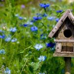 How To Build Wooden Birdhouses