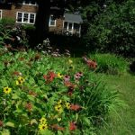 how to start a butterfly garden