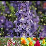 22 Best Flowers for Full Sun ~ Heat Tolerant Flowers for Containers