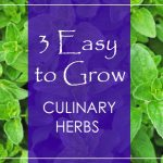 3 Easy to Grow Culinary Herbs