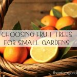 Choosing Fruit Trees for Small Gardens