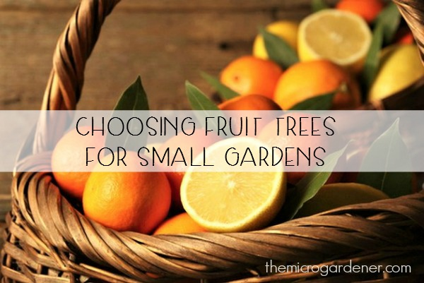 Fruit Trees for Small Gardens
