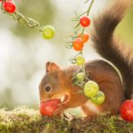 How To Protect Tomato Plants From Squirrels