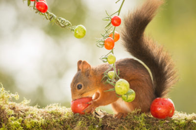 Protect Your Garden from Squirrels