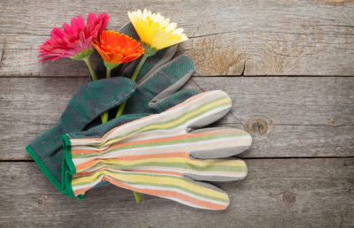 How to Select Garden Gloves