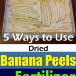 5 Ways To Use Dried Banana Peels As A Fertilizer
