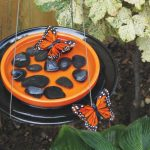 Make a DIY Butterfly Feeder