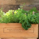 Make a Wine Box Herb Garden Fit for a Connoisseur